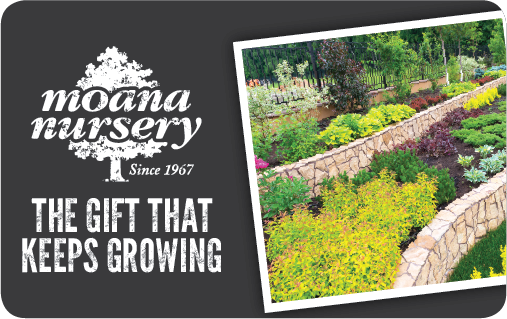 Moana Nursery eGift Card